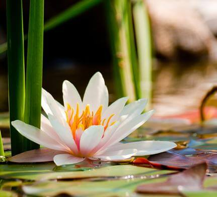 AdvanceAdvanced meditation retreat opening to love