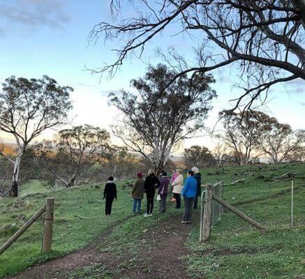lifeflow blog introducing peppertree retreat walk