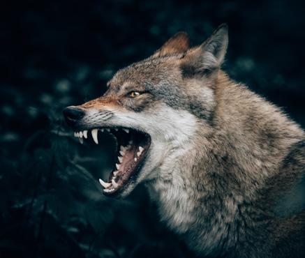 lifeflow blog embracing anger