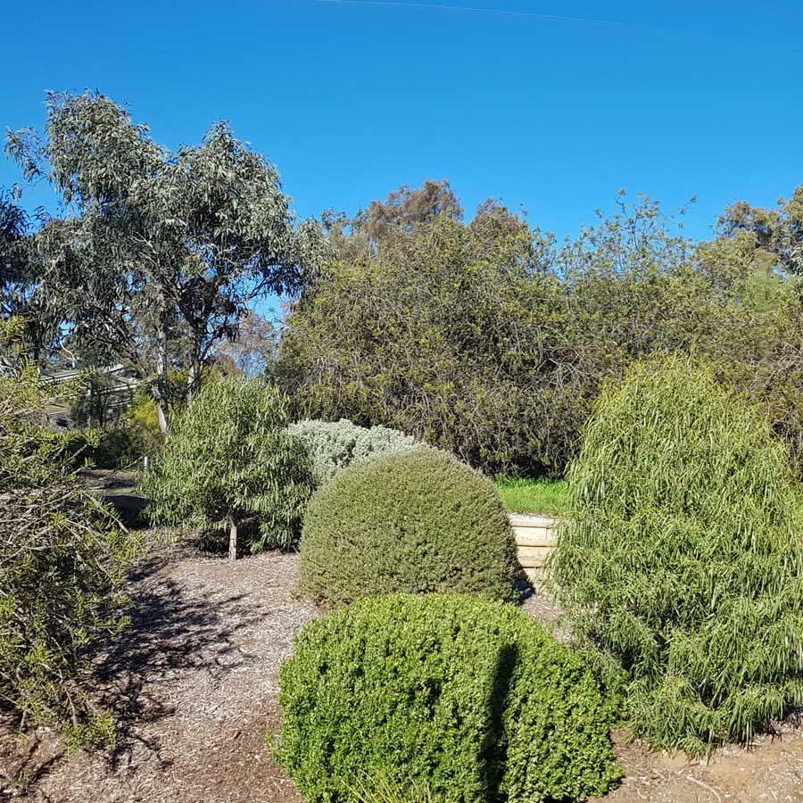 Garden view #1