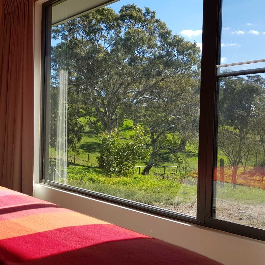 Gum tree farmland view